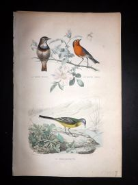 Buffon 1849 Hand Col Bird Print. Bluethroat, Wagtail